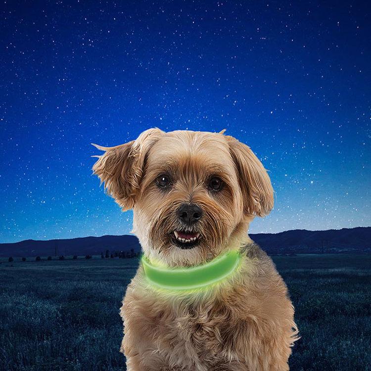 Mynd Nite Ize Nite Dog LED hundaól endurhlaðanleg græn